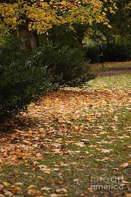 Autumn's Wondrous Colors 5 Art Print by Carol Lynch
