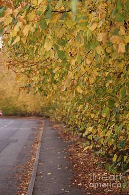 Autumn's Wondrous Colors 7 Art Print by Carol Lynch