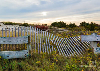 Photograph - Autumnul Beach Garden by Michelle Wiarda-Constantine
