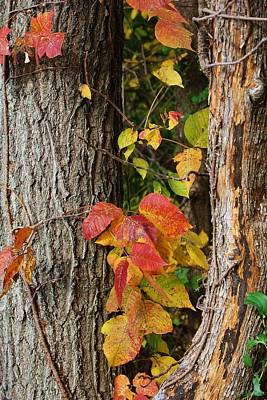 Photograph - Autumns Colors by Bruce Bley