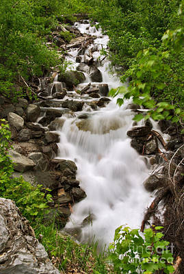 Photograph - Avalanche Creek Cascade by Charles Kozierok