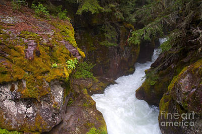 Photograph - Avalanche Creek by Steve Stuller
