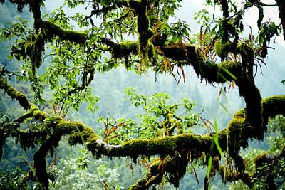 Power Photograph - Avatar Trail by Raimond Klavins