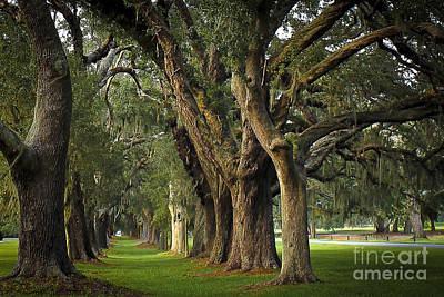 Avenue Of Oaks On St Simons Island Art Print by Reid Callaway