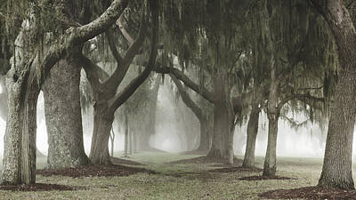 Beach Photograph - Avenue Of Oaks by Barbara Kraus - Northrup