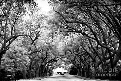 Old School Houses Photograph - Avenue Of Oaks by John Rizzuto