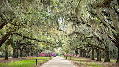 Avenue Of Oaks Print by Tommy  White