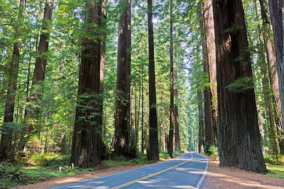 Photograph - Avenue Of The Giants by Heidi Smith