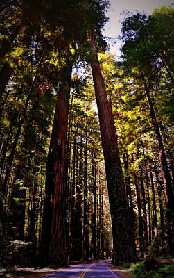 Photograph - Avenue Of The Giants by Michelle Calkins