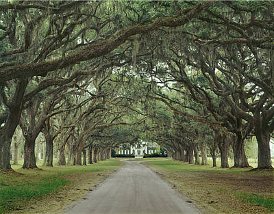 147706-avenue Of The Oaks  Art Print
