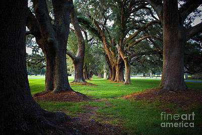 Avenue Of The Oaks On St Simons Island Ga Art Print by Reid Callaway