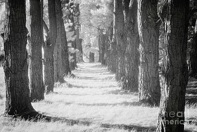 Photograph - Avenue Of Trees New Zealand by Colin and Linda McKie