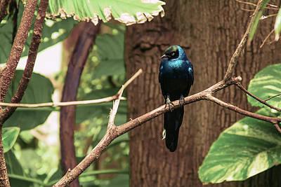 Photograph - Avian 2 by Craig Thomas