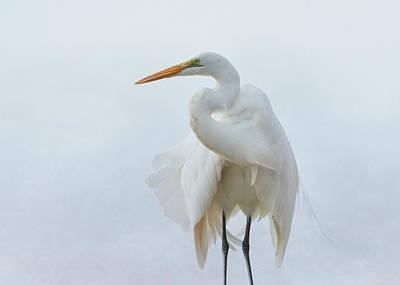 Avian Angel Art Print