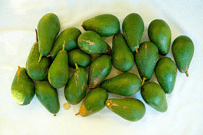 Avocados In A Bunch, Santa Paula Print by Panoramic Images