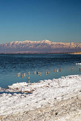 Avocets On Antelope Island Art Print by Jim West