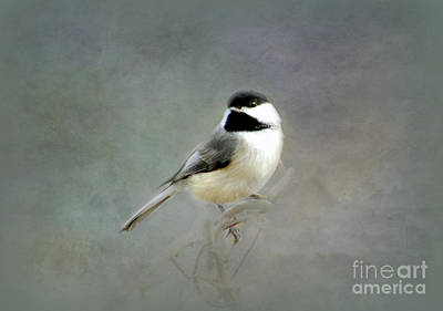 Awaiting Spring Art Print by Brenda Bostic