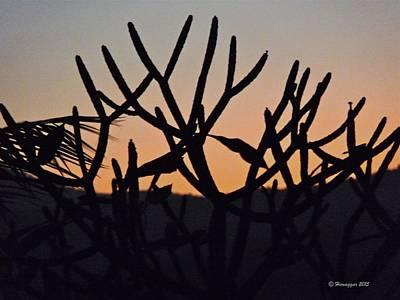 Photograph - Awaiting Spring by Hemu Aggarwal