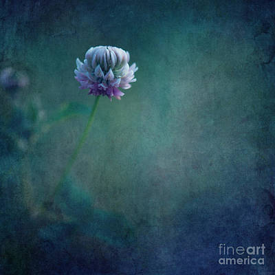 Honey Photograph - Awaken From A Dream by Priska Wettstein