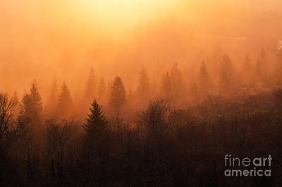Photograph - Awakening by Anthony Heflin
