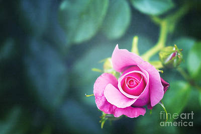 Garden Wall Art - Photograph - Awakening by Ivy Ho