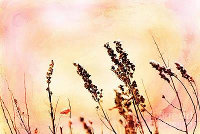 Photograph - Awakening by Beve Brown-Clark Photography
