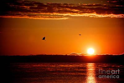 Photograph - Awakening Sun by William Norton