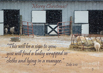 Photograph -  In A Manger by Nava Thompson