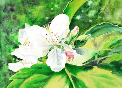 Apple Watercolor Painting - Awesome Apple Blossoms by Irina Sztukowski