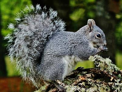 Photograph - Awesome Tail by VLee Watson