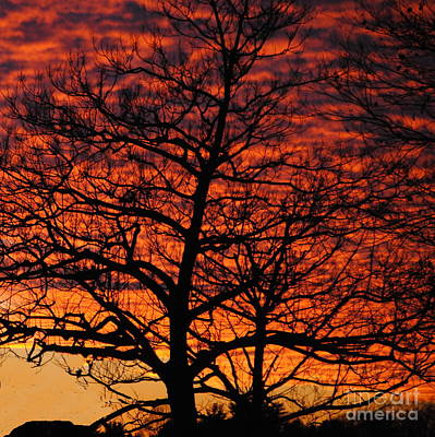 Photograph - Awesome Winter Sunset - Longwood Gardens - Square by Jacqueline M Lewis