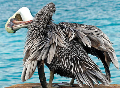 Awkward Pelican Art Print by Jean Noren