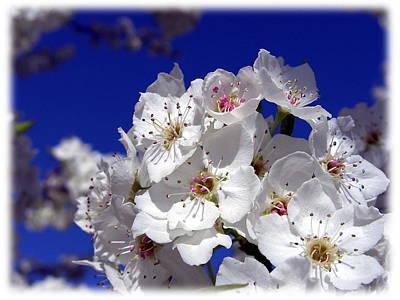 Awsome Blossoms Art Print by Gerry Childs