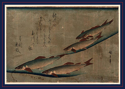 Trout Stream Drawing - Ayu Zu, River Trout Ayu. Between 1841 And 1844 by Utagawa Hiroshige Also And? Hiroshige (1797-1858), Japanese