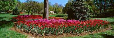 Azalea And Tulip Flowers In A Park Art Print by Panoramic Images