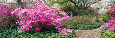 Garden Flowers Photograph - Azalea Flowers In A Garden, Garden by Panoramic Images