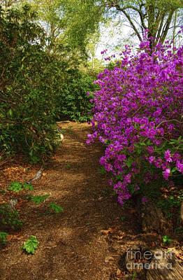 Photograph - Azalea Garden Path by Debra Fedchin