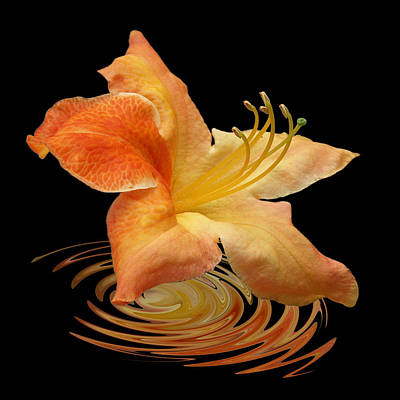 Photograph - Azalea Ripples by Gill Billington