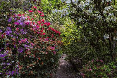 Flower Blooms Photograph - Azalea Trail by Garry Gay