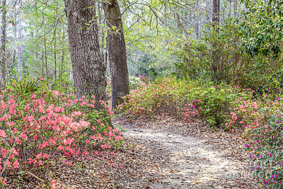 Photograph - Azalea Woods by Susan Cole Kelly