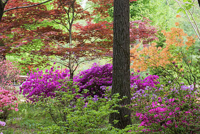 Azaleas And Japanese Maples At Azalea Print by Panoramic Images