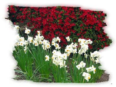 Azaleas And Narcissus Art Print