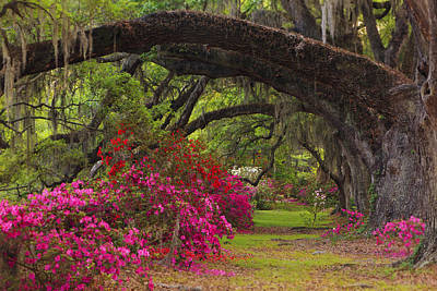 Plantation Photograph - Azaleas And Oaks by Mike Lang
