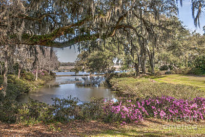 Photograph - Azaleas Blooming by Dale Powell