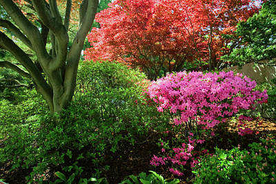Washington D.c. Photograph - Azaleas In Spring In National by Panoramic Images