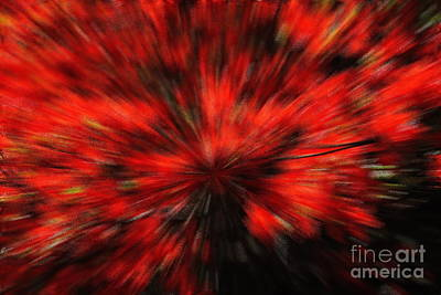 Photograph - Azaleas Abstract by Jacqueline M Lewis