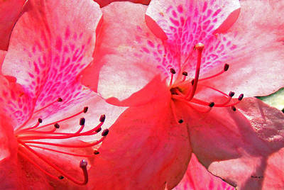 Photograph - Azaleas Upclose by Duane McCullough