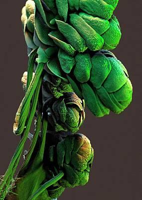 Azolla Plant Art Print