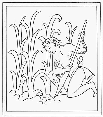 Cornfield Drawing - Aztec Farmer by Granger