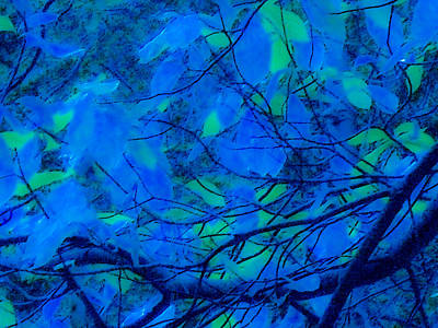 Digital Art - Azure Leaves by Kristen R Kennedy